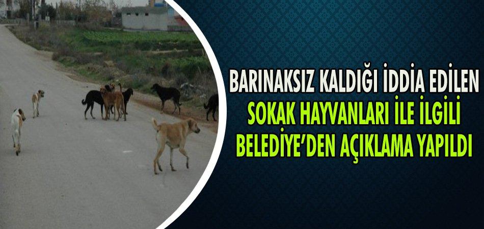 Barınaksız kaldığı iddia edilen Sokak Hayvanları ile ilgili Belediye'den Açıklama Yapıldı