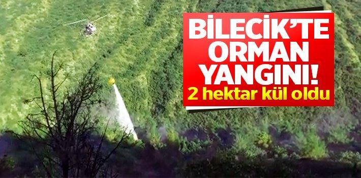 BİLECİK'TE ORMAN YANGINI