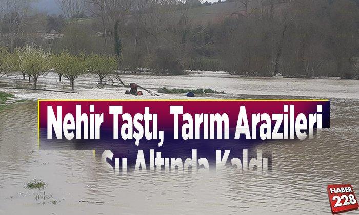 Nehir taştı, tarım arazileri su altında kaldı